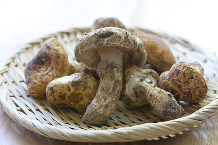 matsutsake ciuperci