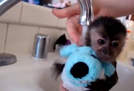 Maimutica face baie