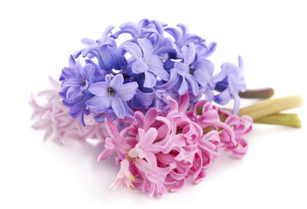Imagini pentru flori de martie