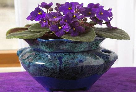 5 flori de camera usor de ingrijit. Black Bedroom Furniture Sets. Home Design Ideas