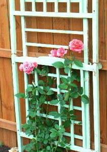 grilaj flori agatatoare