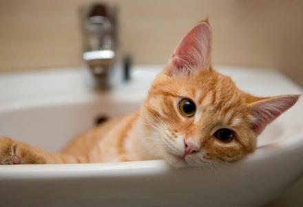 pisica stand in chiuveta
