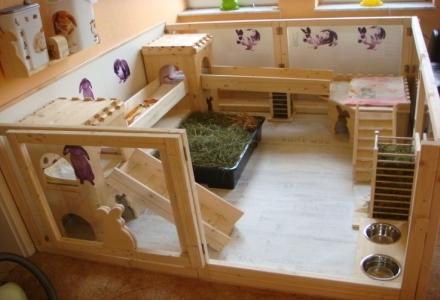cusca pentru iepuri de casa