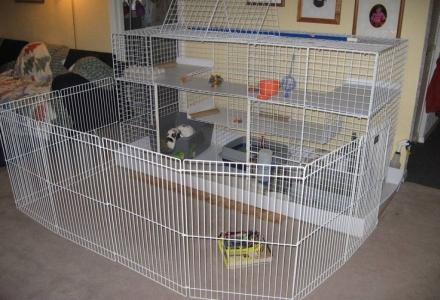 custi mari pentru iepuri de casa