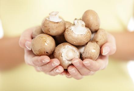 ciuperci comestibile