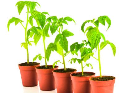 legume in ghiveci