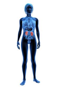 regim hipoproteic