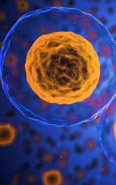 dermatita atopica bebelusi tratament osteoporoza de la
