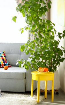 5 beneficii ale plantelor de apartament