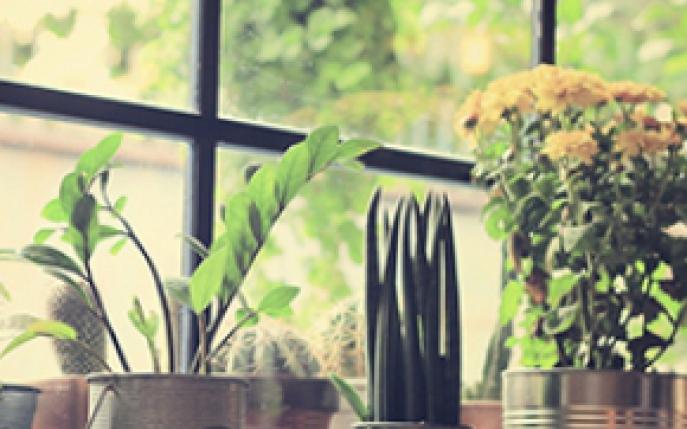 Plante decorative norocoase for Plante decorative