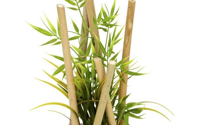 Plante de apartament plante de interior for Plante de interior
